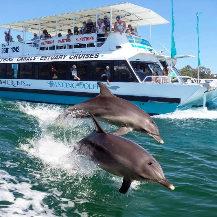 Mandurah Dolphin sightings on our Cruise & Tour
